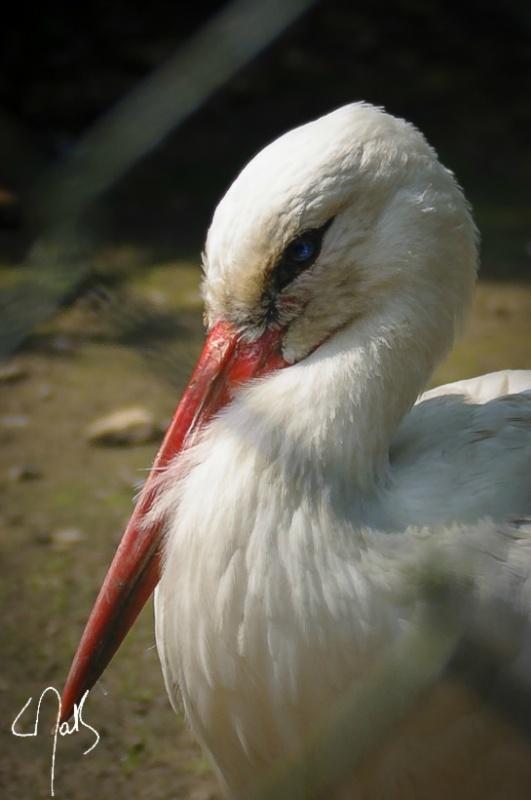 Vogelpark-01