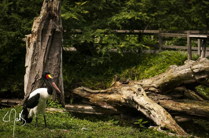 Vogelpark-24