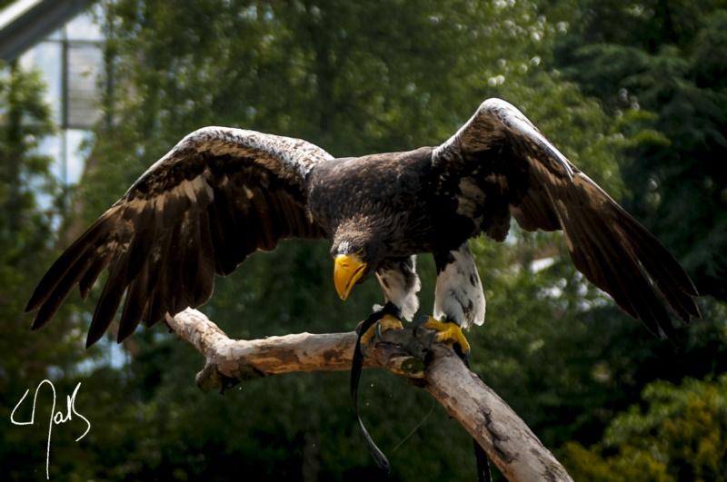 Vogelpark-35