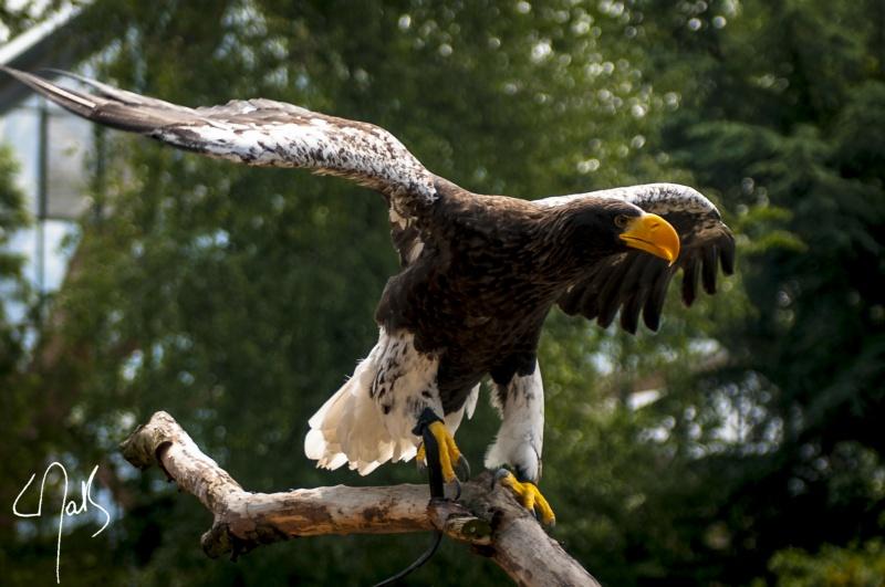 Vogelpark-36