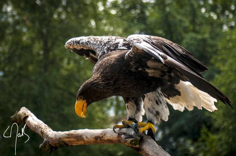 Vogelpark-37