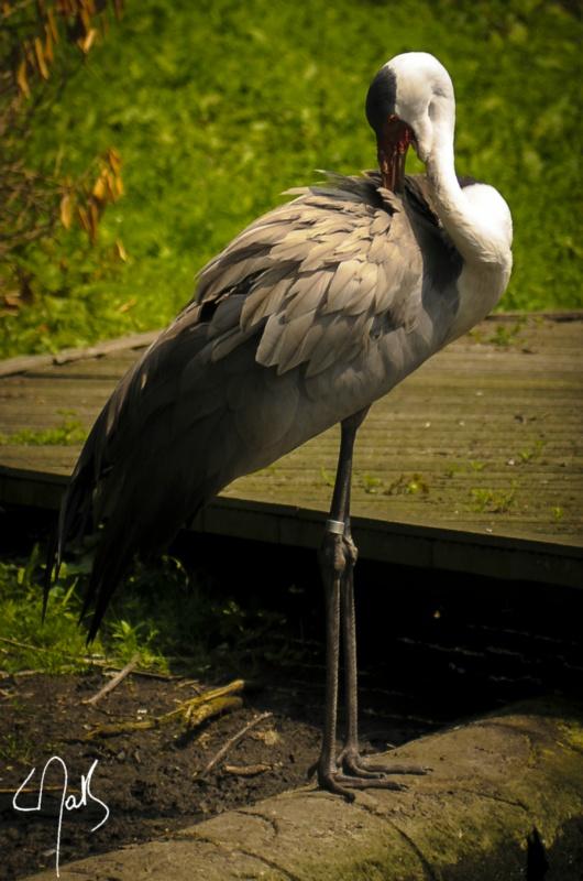 Vogelpark-05