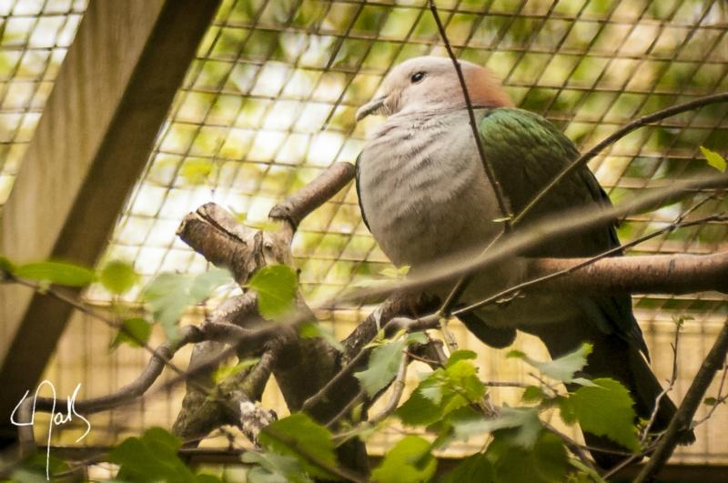 Vogelpark-07